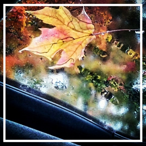 Magical editing; magical leaf; muted sky...